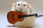 Müzisyen fareler
