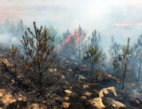 Pamukovada makilik alanda yangın