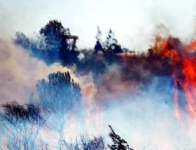 Gülnarda orman yangını