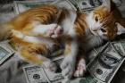 Paralı kediler