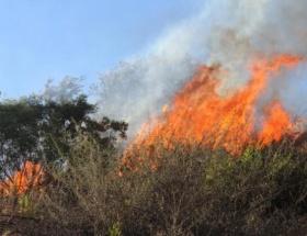Bilecikte orman yangını
