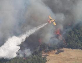 Ormanı yaktılar,serbest kaldılar