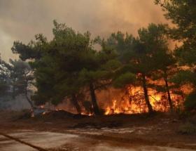 Gebzede orman yangını