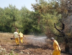 Kadirlide 27 hektar ormanlık alan kül oldu