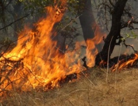 Karamürselde orman yangını