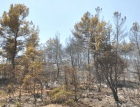 Anız yangını 4 hektarı kül etti