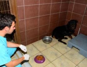 Köpeği yangından belediye ekipleri kurtardı