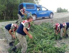 Erzurumda Hint keneviri operasyonu