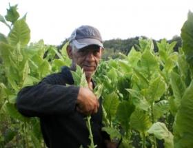 Bulgaristanda Türk tütün üreticileri