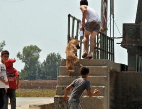 Köpeğe inanılmaz işkence!