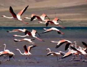 Flamingolarla renklendi