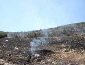 Korkutelinde makilik alanda yangın