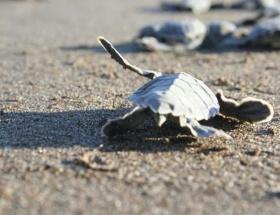 Kaplumbağa cenneti oldu!