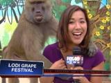 Canlı yayında maymun tacizi