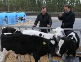 Medvedev sığırları inceledi