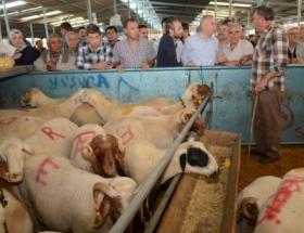 Başkan Zolan, hayvan pazarını denetledi