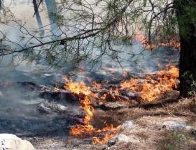 Düzcede 5 hektarlık ormanlık alan kül oldu
