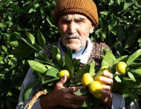 Mandalina üreticisi pazar bulamıyor