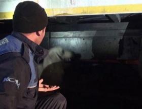 Terasta asılı kalan köpek son anda kurtarıldı