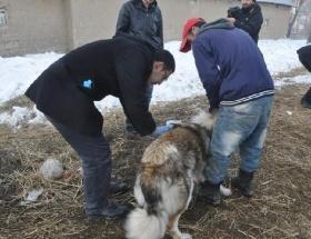 Kedi ve köpeklere kuduz aşısı
