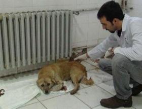 Yavruları ölen köpeğe doktorlar sahip çıktı
