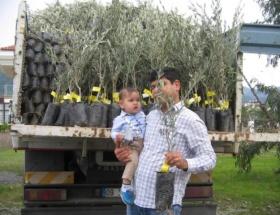 Marmariste 15 bin zeytin fidanı dağıtılıyor