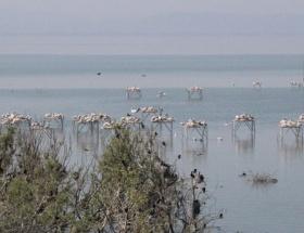 Kuraklık Manyas Gölünü de vurdu
