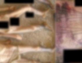 Suriyede şok işkence fotoğrafları