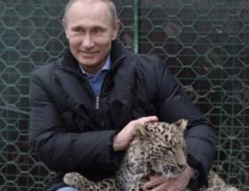 Putinin sevdiği leopar, kameramana saldırdı