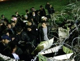 Suriyeliler sınırda meyan kökü topluyor