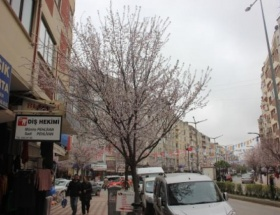 Bafrada ağaçlar beyaza büründü