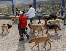 750 köpek Büyükşehir korumasında