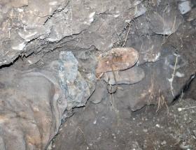 Mezar kazısında korkunç manzara