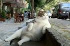 En Komik Kedi Oturuşları