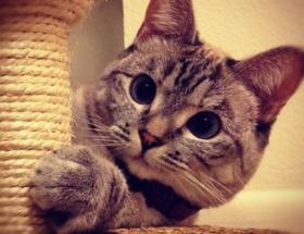 Instagramın fenomen kedisinin 1 milyonu aşkın takipçisi var