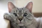 Instagramın fenomen kedisi Nala