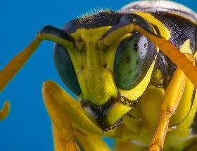 Diyarbakırda arı dehşeti