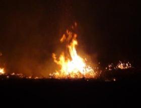 Bandırmada orman yangını