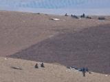 IŞİD militanları sınırda