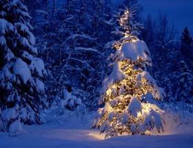 Amerikada Noel heyecanı