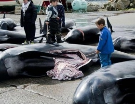 Japonyada balina etine ilgi düştü