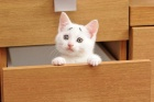 O kedicik doğuştan endişeli!