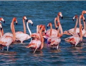 Avcılar flamingoyu öldürdü