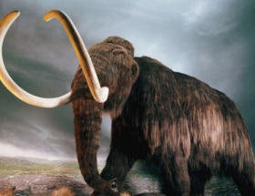 40 bin yıllık mamut