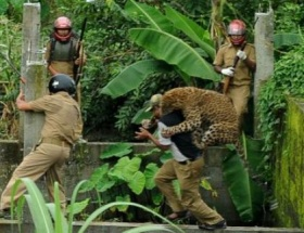Leopar ava çıktı