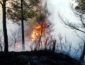 Kepsuttaki yangın kontrol altında