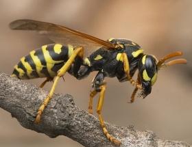Arılar yine sır oldu