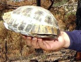 Kaplumbağa tozunda boğuldu