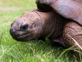 Çaldığı kaplumbağayı Facebookta sattı
