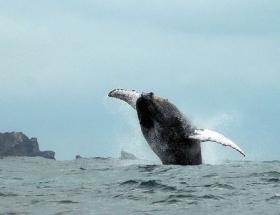 Balinaların davası reddedildi